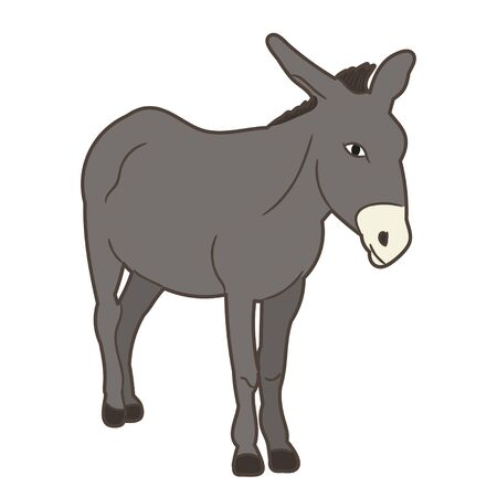 vector, isolated gray donkey standing on white background