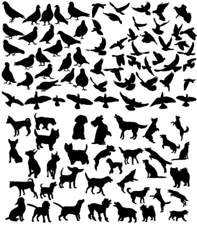 Vector, isolated big set of pets, silhouette of a dog and a bird, collection