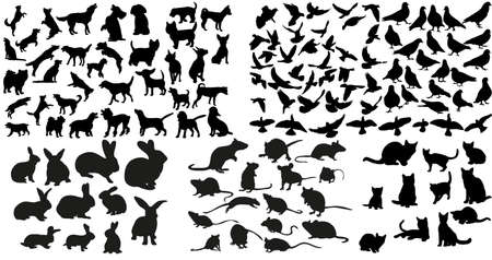 Vector, isolated silhouette of rat, cats and rabbits, dog and doves collection Vector Illustration