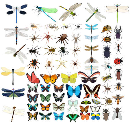 vector isolated, insects set