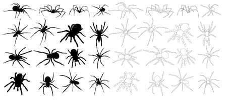 isolated, set, spider collection, sketch and silhouette on white background