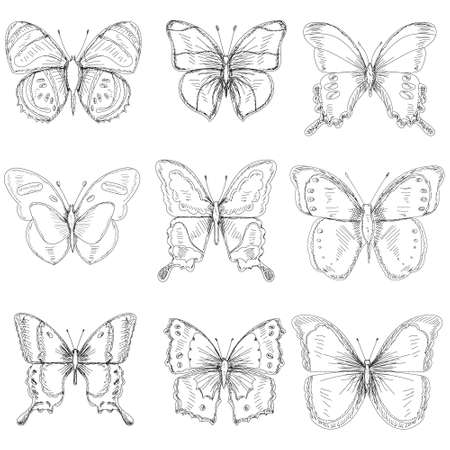 vector, isolated, set of sketches with butterfly lines, collection Ilustração