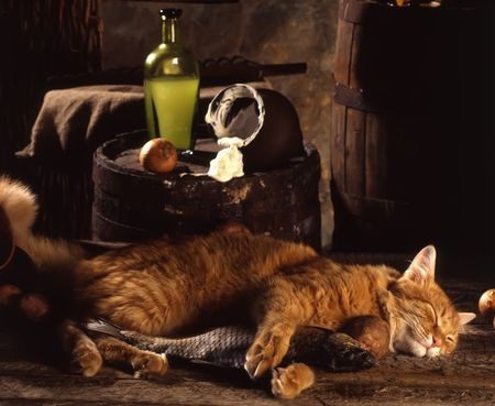 red cat sleeps with the dried fish in basement near a barrel on which sour cream is poured out from a jug photo