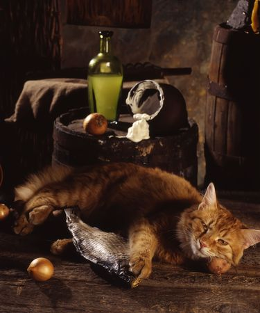small group of objects: red cat sleeps with the dried fish in basement near a barrel on which sour cream is poured out from a jug