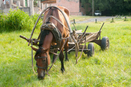 Grazing horse and old cart