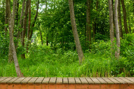 Wood flooring in the forest. Horizontal background.