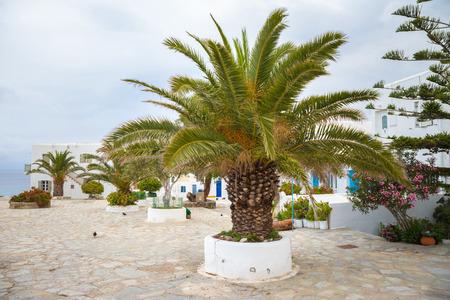 Palm tree on Mykonos town, Greece 版權商用圖片