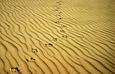Animal track left in the sand Stock Photo - 664570