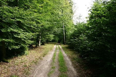 greenness: road among forest greenness Stock Photo