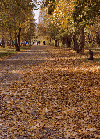 walking path: Walking path strewn with autumn leaves. Stock Photo