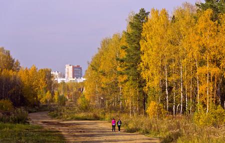 suburban: Road in a suburban forest.Golden autumn.
