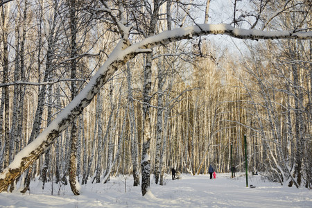 coldly: Trees in snow at winter Park.Russia. Stock Photo