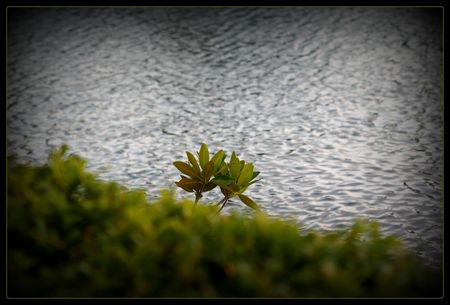 Lone branch over the water
