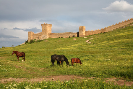 sudak: Horses are grazed on a meadow against the Genoese fortress in Sudak, Crimea