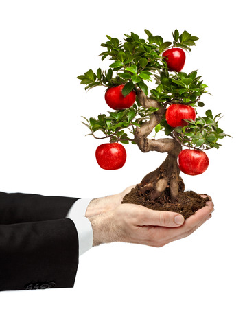 hands holding bonsai tree with apple isolated on white