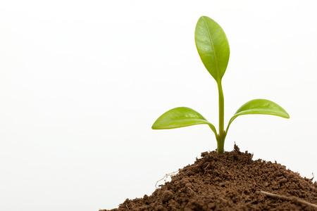 weinig plantengroei op de grond op wit wordt geïsoleerd
