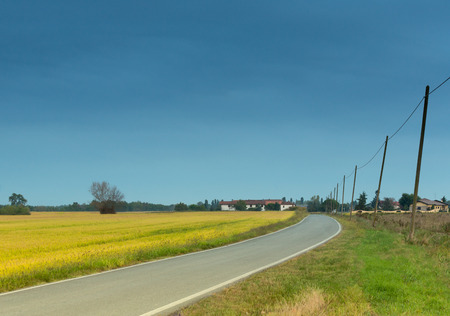 telephone poles: road with phone poles in countryside field