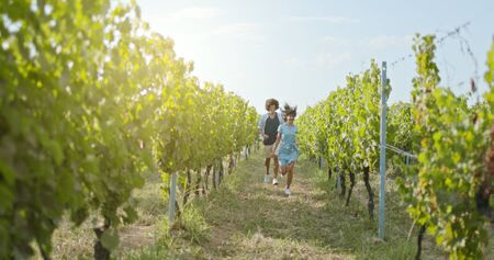 Romantic love couple walking and playful running thru green vineyards. Front follow wide shot.Friends italian trip in Umbria Stock Photo