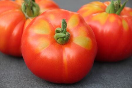 Red tomato with little green after harvesting them from kitchen garden in the Netherlands