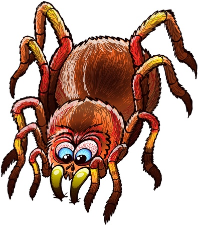 disturbing: Big and determined tarantula with urticating hairs, long legs and bulging blue eyes while stopping its walk and attacking by furiously sinking its sharp fangs deeply into a surface