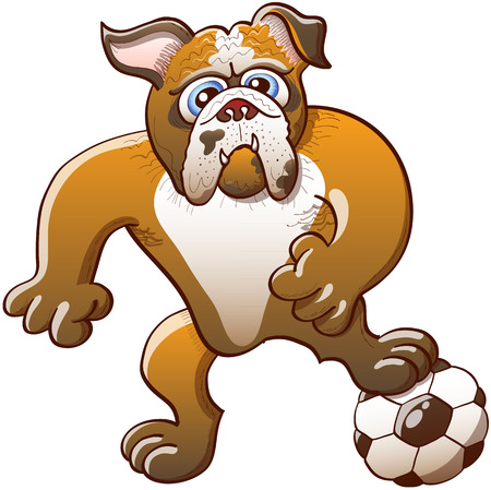 intimidating: Brave bulldog stepping on a soccer ball, clenching its fists and staring at the objective while preparing a kick Illustration