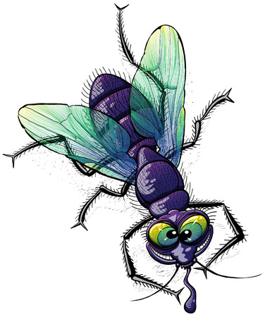 Top view of a disgusting and mocking fly with crazy face, violet body, green wings and bulging eyes while posing, grinning and staring