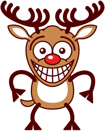 self conscious: Funny brown reindeer with big antlers and red nose while staring at you, posing and grinning in an embarrassed way