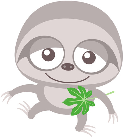 eager: Cute baby sloth with gray fur, long arms, bulging eyes surrounded by dark patches and lazy mood while staring at you, posing, swinging unsteadily, smiling sweetly and holding a Cecropia leaf