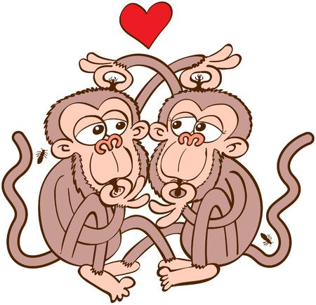 Reizende Paare der braunen Affen in einer romantischen Begegnung Dating, Spaß haben und zart in der Liebe fühlen, während für Läuse in die jeweils anderen Kopf suchen und sie zu essen