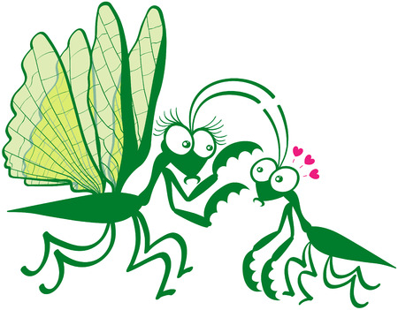 hypnotizing: Funny couple of praying mantises showing a big female while hypnotizing its mate by attracting its attention to its spiny front legs. The tiny male looks fascinated and shows big eyes and red hearts