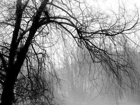 Willow Tree Zdjęcie Seryjne