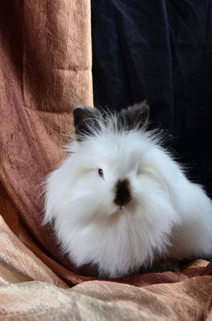 nicely: A fluffy white bunny who is sitting nicely  Stock Photo