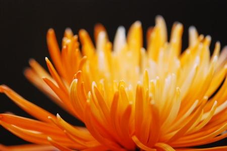 백라이트 꽃
