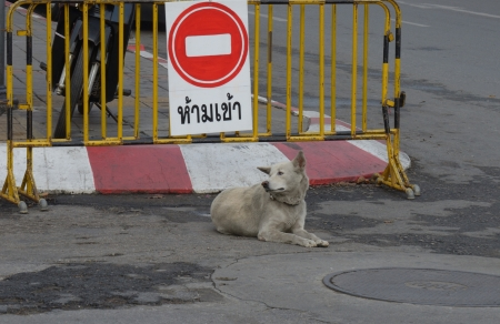 A street dog in Chian Mai Thailand looks to the left photo
