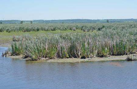 federally: Marsh area in wetland