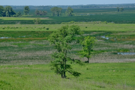 federally: Tree in Horicon Marsh