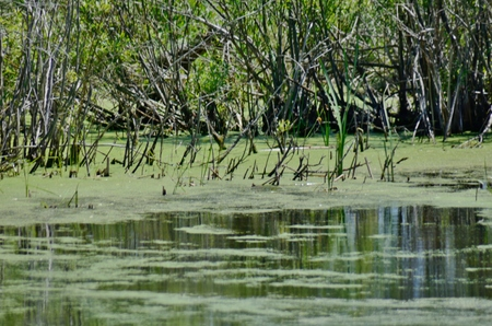 federally: Mossy water in a wetland Stock Photo