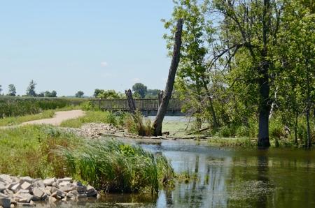 federally: Horicon Marsh Tree Stock Photo