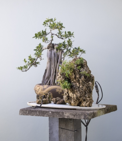 A couple of Asian bonsai plants  featuring a man made watering system photo