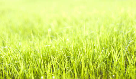 Natural beautiful green grass with shallow DOF and nice bokeh lit by bright sun photo