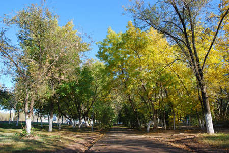 Green and yellow trees on alley fall time Stock Photo
