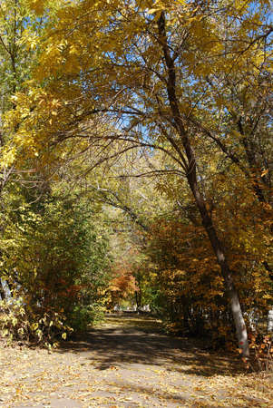 Colorful yellow and red trees in fall time alley Stock Photo