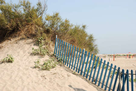Typical beach scene: sand dune with bushes, plants and fence