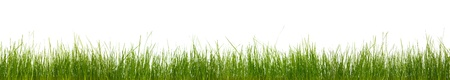Extra large horizontal strip of grass, dirt, and roots isolated on white background. photo