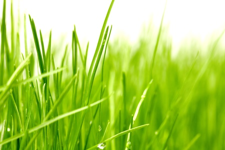 grass background Stock Photo - 9212188