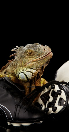 Iguana in football concept Stock Photo - 10445743
