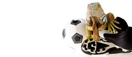 Iguana in football concept photo