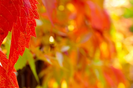 red and green autumn leaves background photo