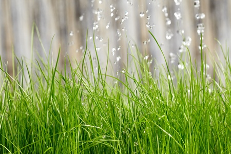 sprinklers: pouring from watering can on grass water  Stock Photo