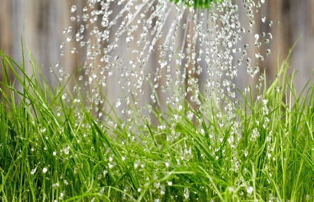 spray can: pouring from watering can on grass water  Stock Photo